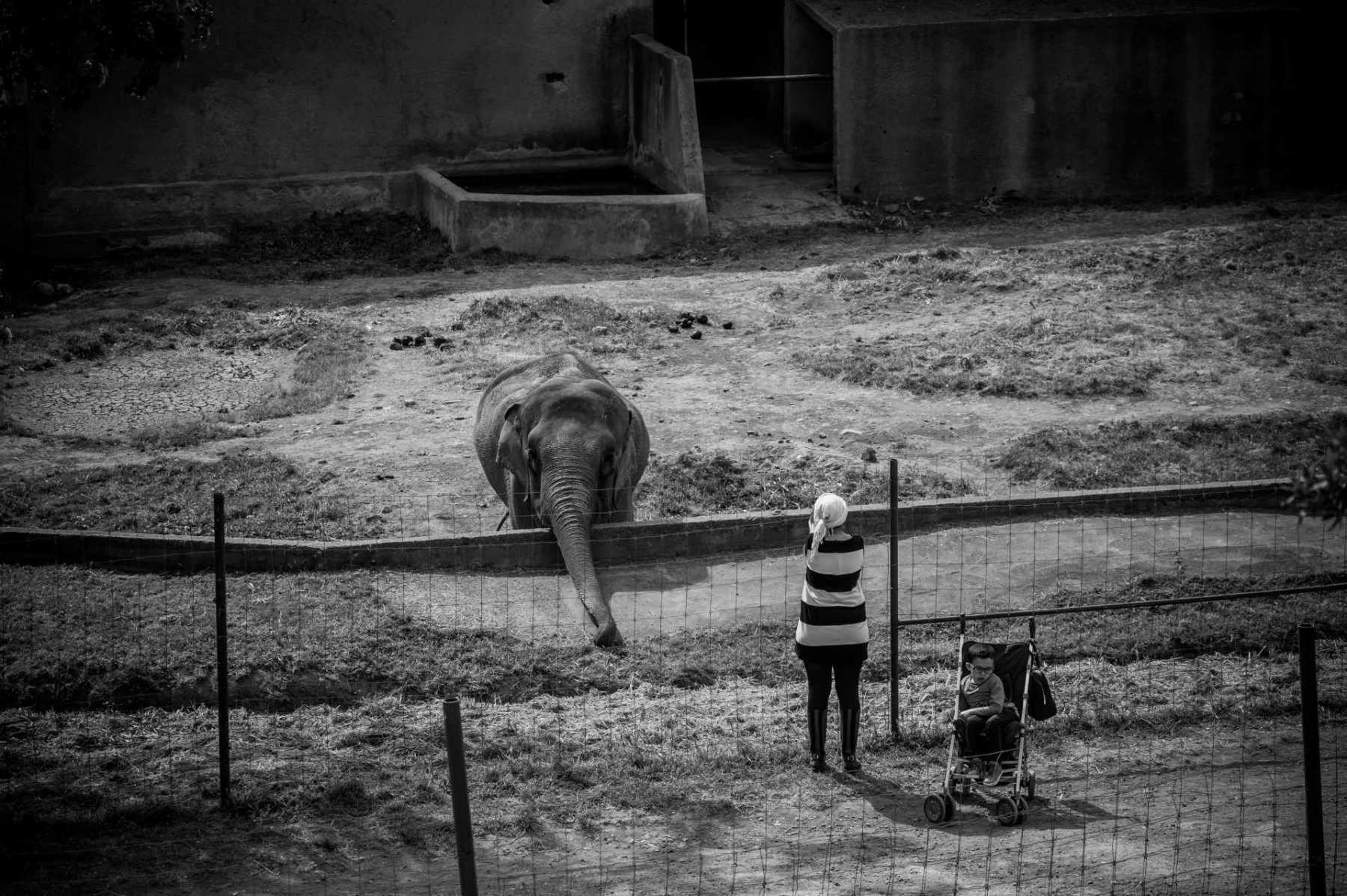Elephant. France, 2016. JMcArthur / Born Free Foundation