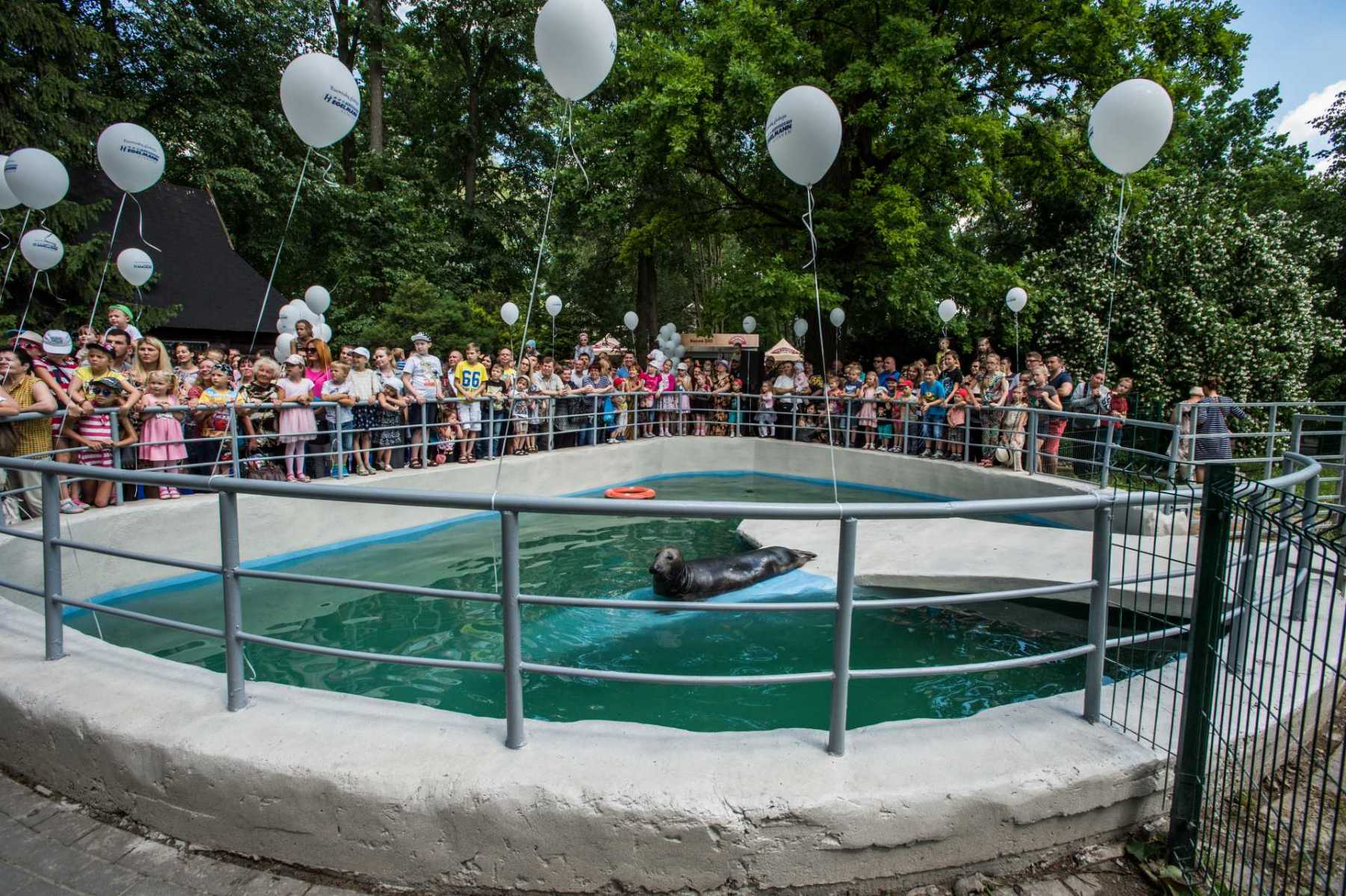 Baltic grey seal. Lithuania, 2016. JMcArthur / Born Free Foundation
