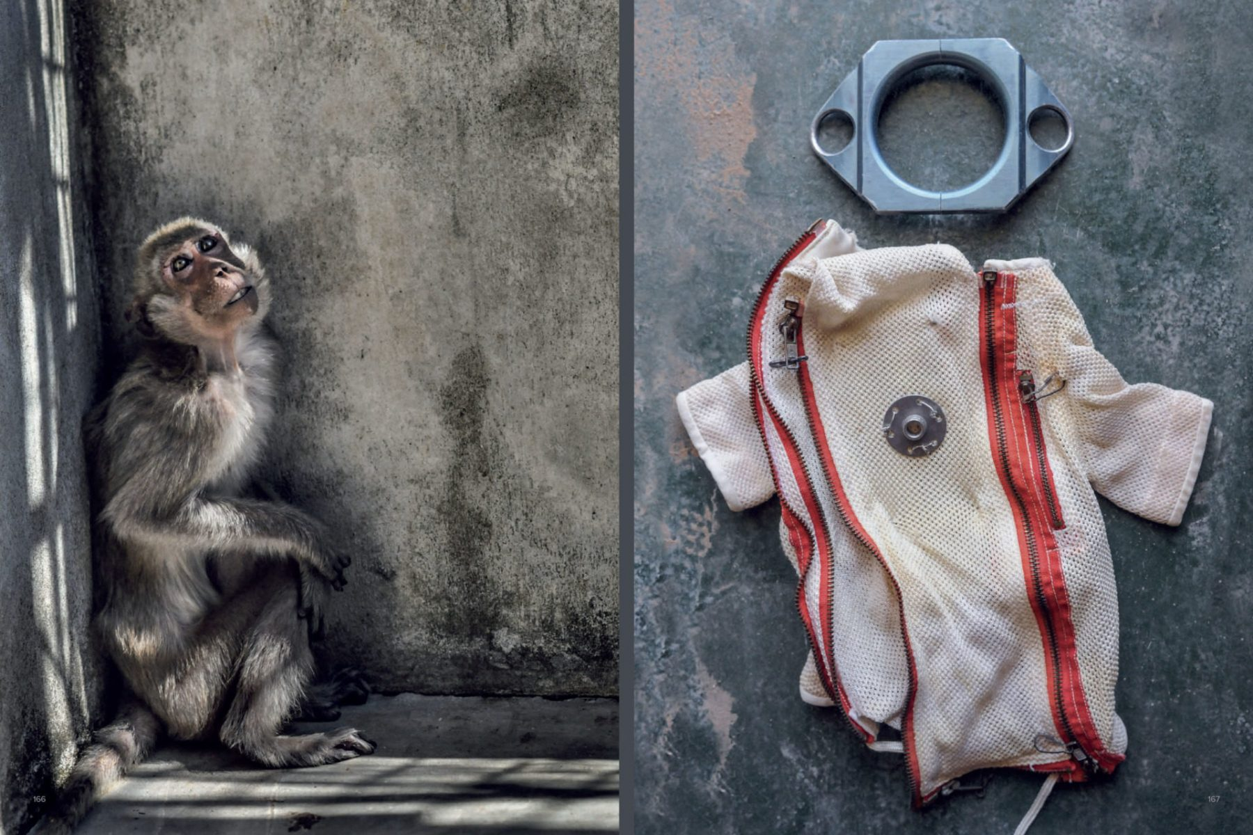 One of hundreds of emaciated long-tailed macaques at a monkey breeding facility for use in scientific research. Laos. Jo-Anne McArthur