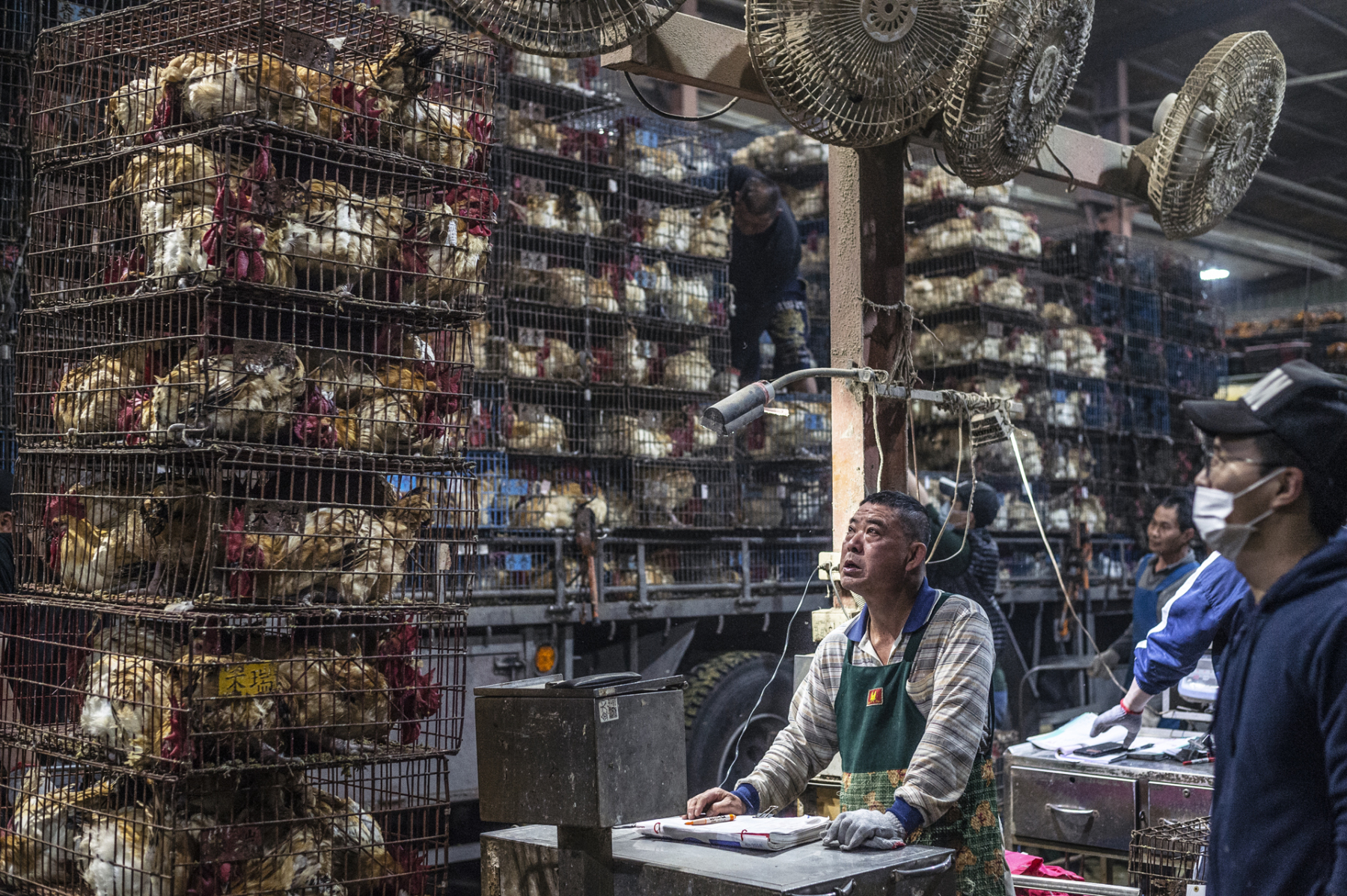 In this busy poultry slaughterhouse, tens of thousands of chickens are processed in a single night. Taiwan. Jo-Anne McArthur