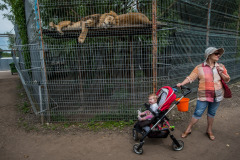 The dullness of captivity and the ubiquitous trip to the zoo is known the world over. Lithuania. Jo-Anne McArthur