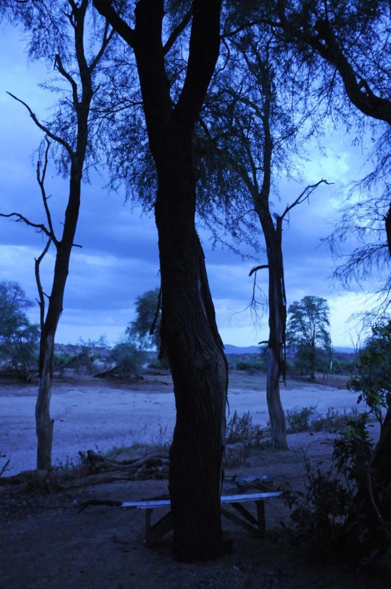 Samburu Park. Kenya.
