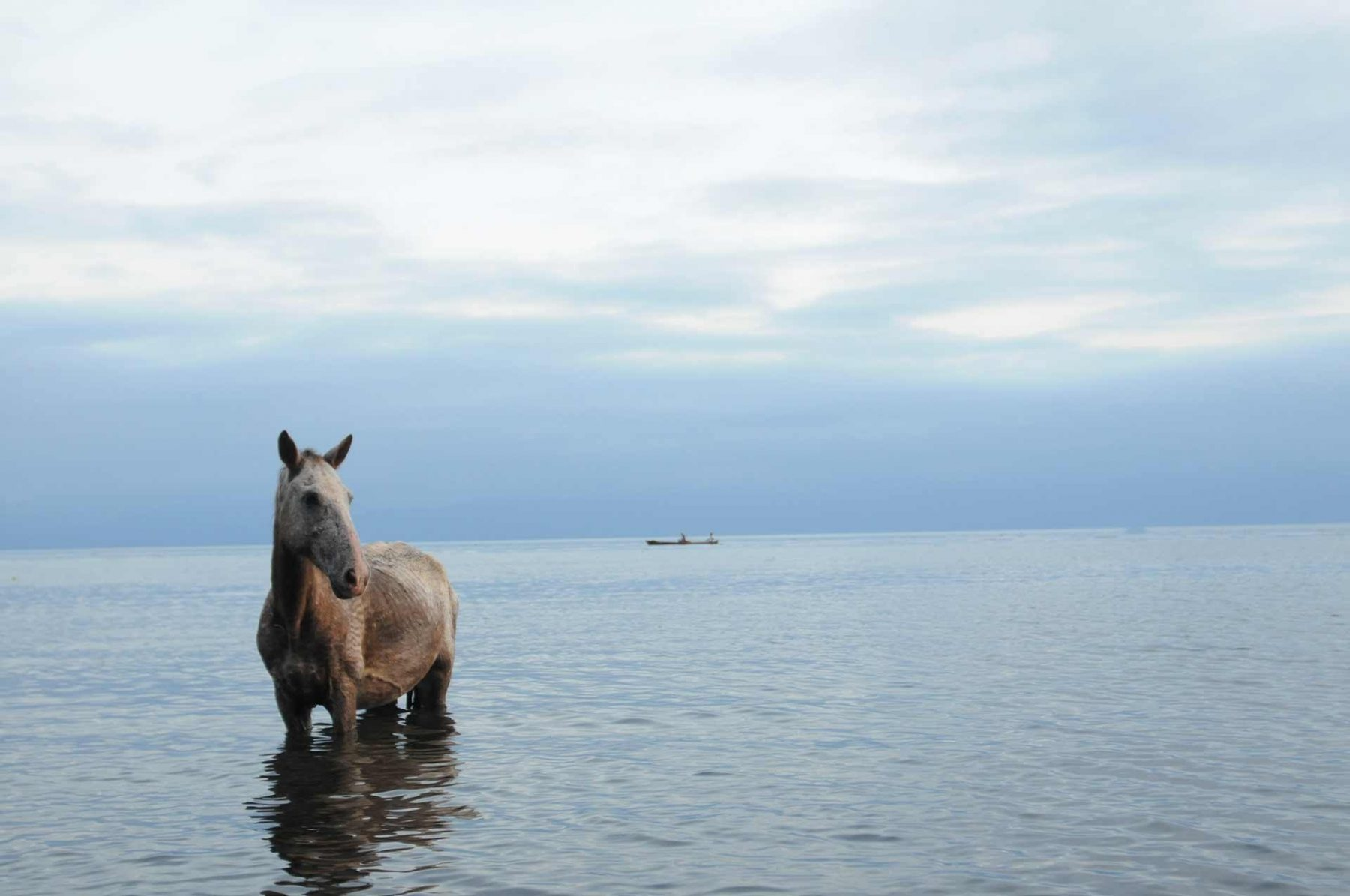 A horse cooling herself in the ocean. Guatemala.
