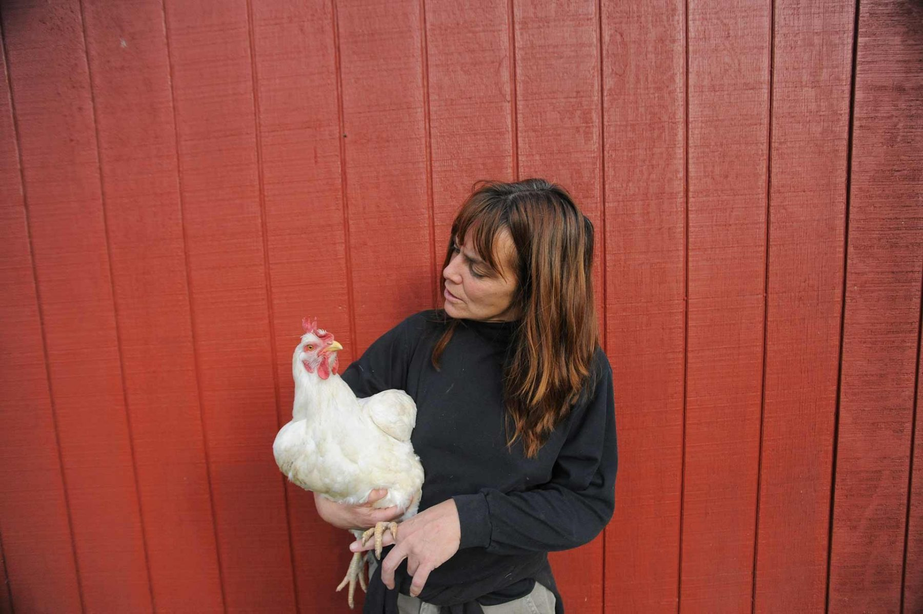 Susie and Lucille. Farm Sanctuary. USA
