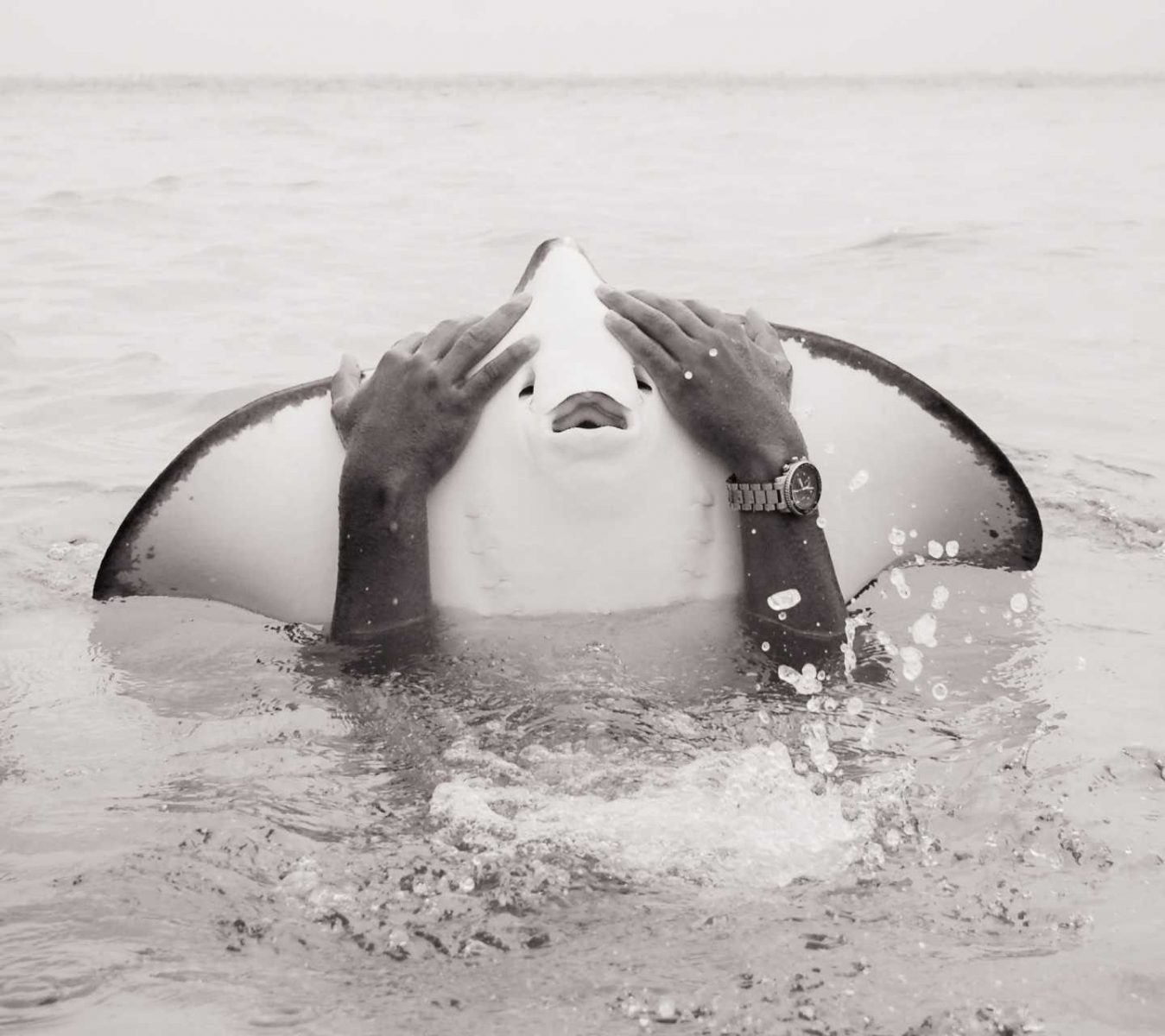 A man playing with a string ray. Cayman Islands.