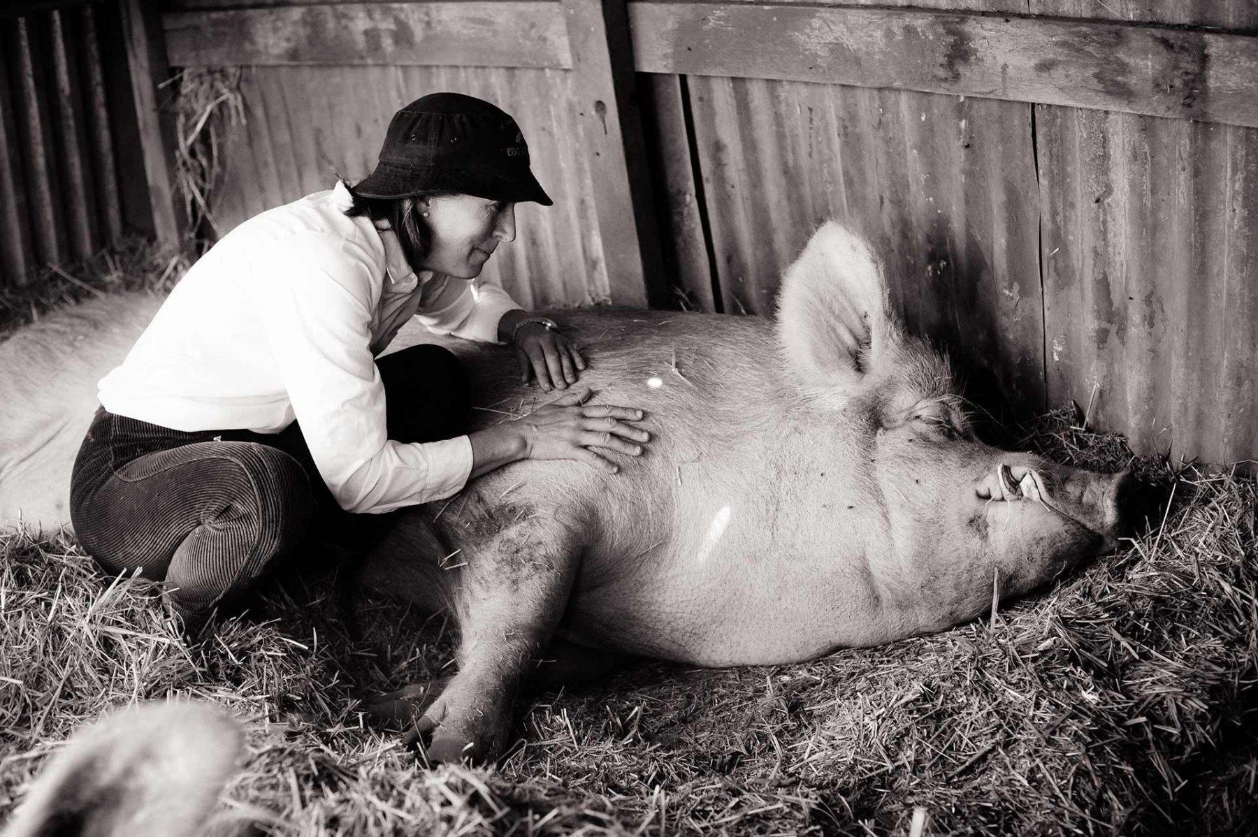 Edgar's Mission founder Pam Ahern with Edgar the Pig. Australia, 2010