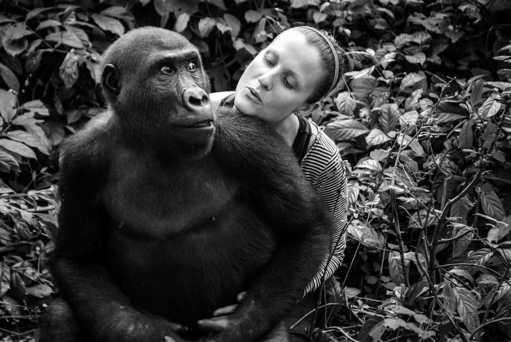 Rachel Hogan with Nkan Daniel, a rescued gorilla whom she raised since he was orphaned by the bush meat trade. Hogan is the Director at Ape Action Africa, a primate sanctuary. Cameroon, 2009