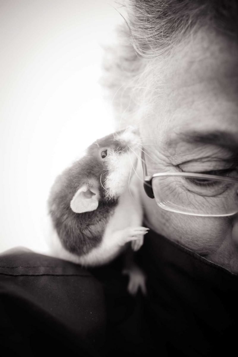 New England Anti-Vivisection Society President Dr. Theodora Capaldo with a rescued rat. USA, 2014