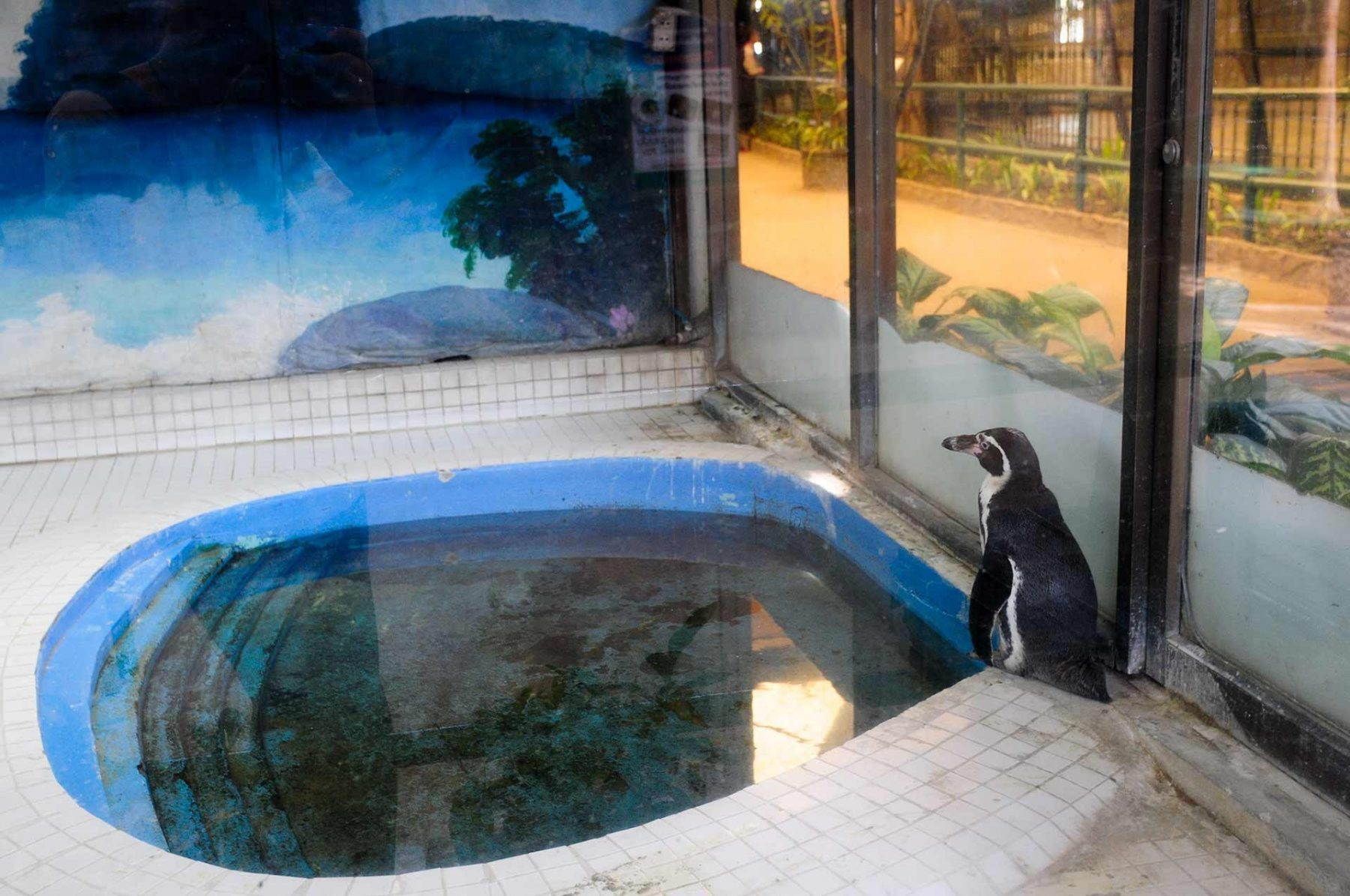 A lone Humboldt penguin at the Pata Mall in Bangkok. Thailand, 2009.