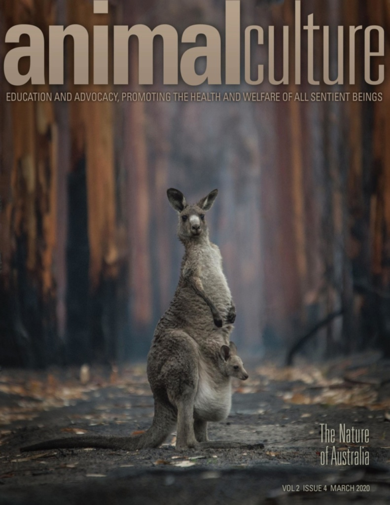 Animal Culture, Cover, 2020