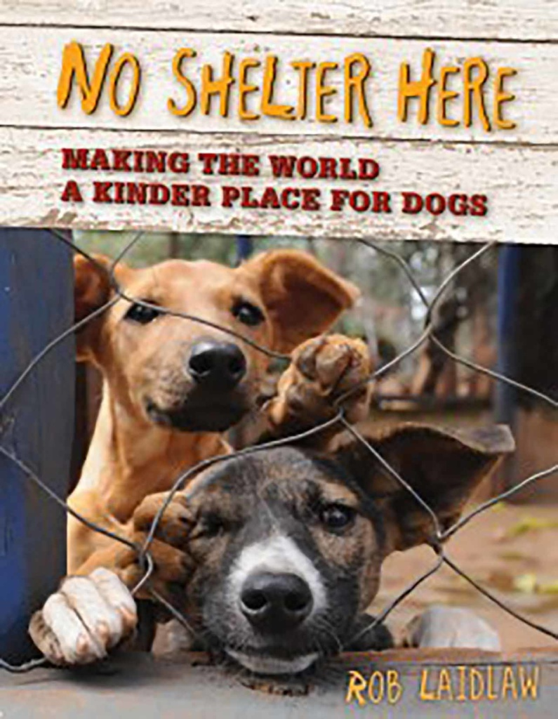 No Shelter Here - Book Cover